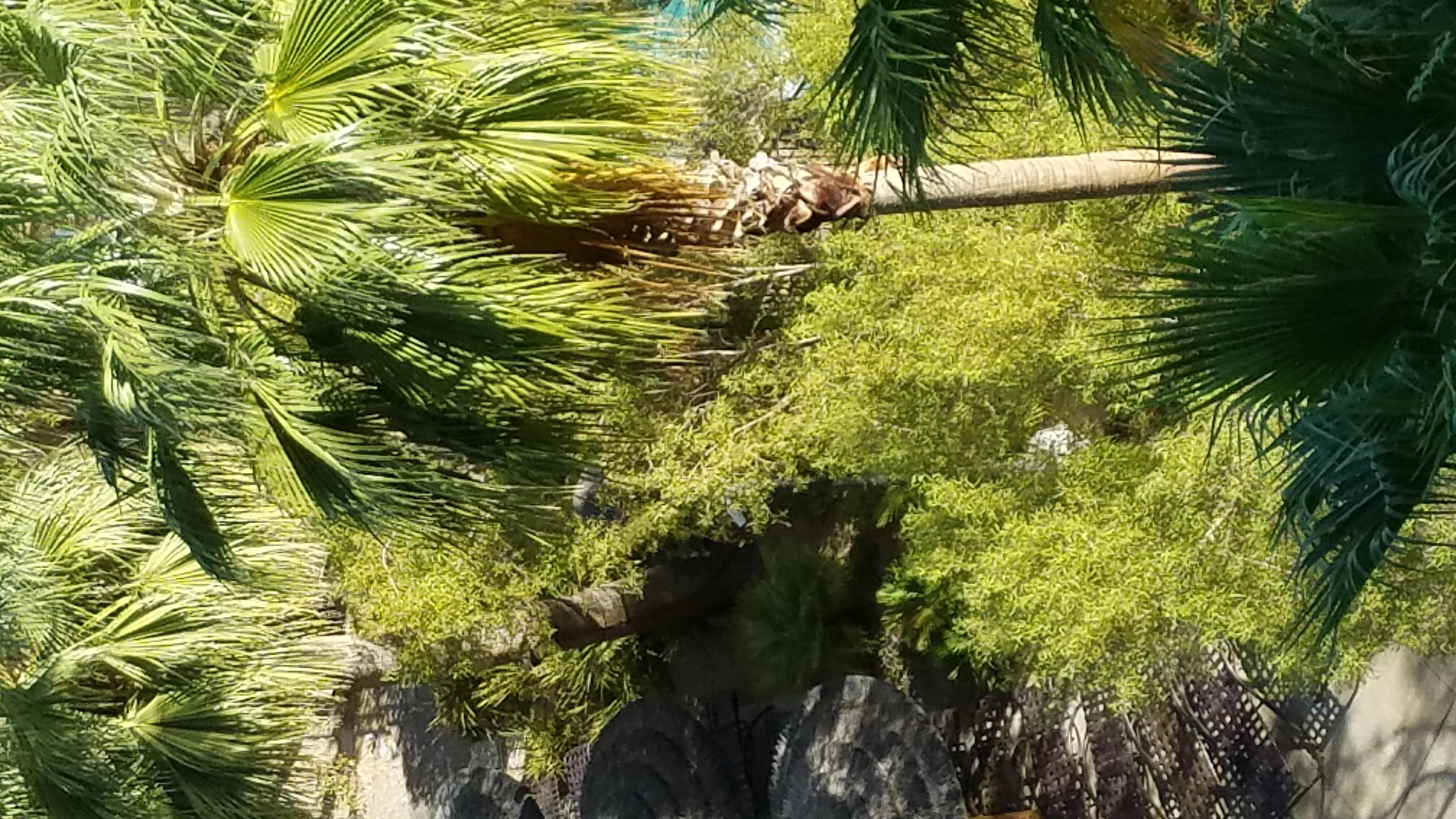 Tahiti Village image