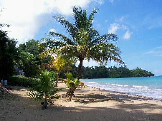 Golden Seas Beach Resort image