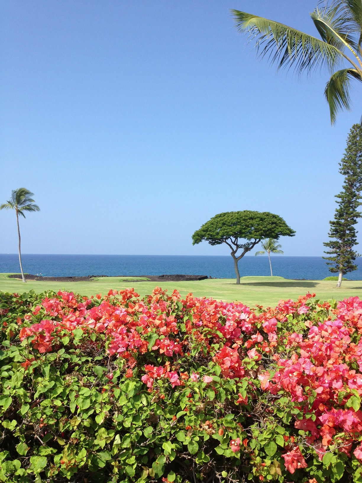 Shell Vacations Club Kona Coast Resort I Timeshare Users Group - Shellvacationsclub